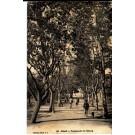 ALGERIE -  - ORAN CPA