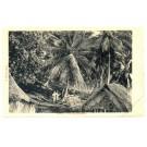 POLYNESIE FRANCAISE -  - PF-TAHITI CPA